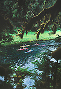 Sea kayaking freshwater stream filled with salmon, flowing into Prince William Sound, Alaska,