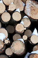 Photo Randy Vanderveen.near Grande Prairie, Alberta.Logs lay in a deck waiting to be loaded up and taken to a processor as the battle against the Mountain Pine Beetle continues in the South Peace.