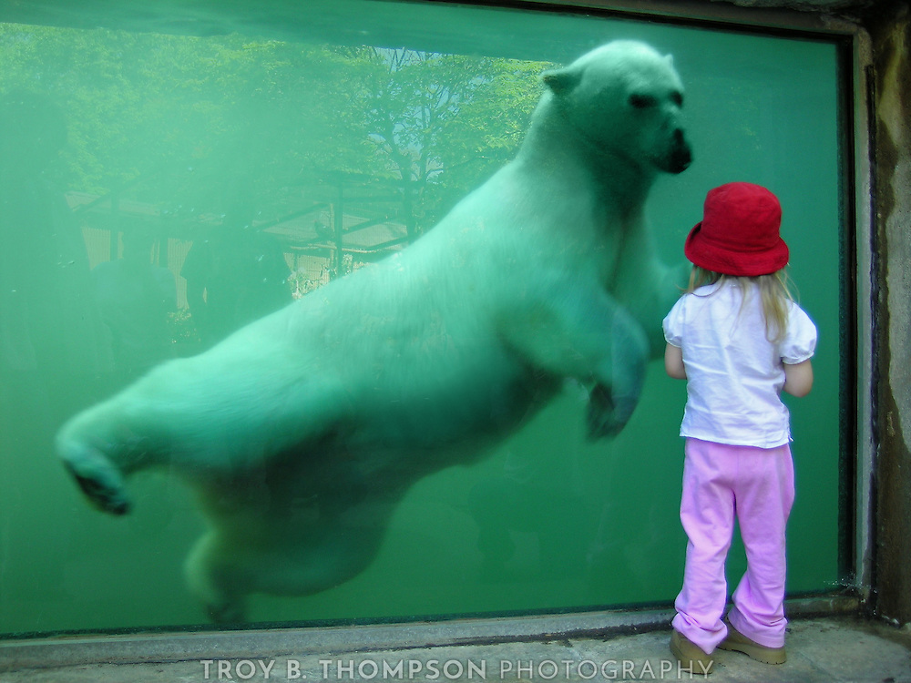 Kenda the polar bear and my friend's neice at the EcoTarium, Worcester, MA