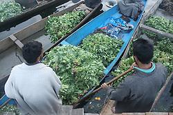 July 5, 2018 - Srinagar, Jammu and KASHMIR, India - Kashmiri vegetable seller sells vegetables at floating vegetable market in Srinagar summer capital of indian administered KASHMIR early in morning on Thursday 05 july 2018. (Credit Image: © Najmus Saqib/Pacific Press via ZUMA Wire)