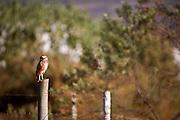 Nova Lima_MG, Brasil...Reserva Ecologica Mata dos Fechos. Na foto uma coruja...The Mata dos Fechos Ecological Reserve in. In this photo, a owl...Foto: JOAO MARCOS ROSA / NITRO