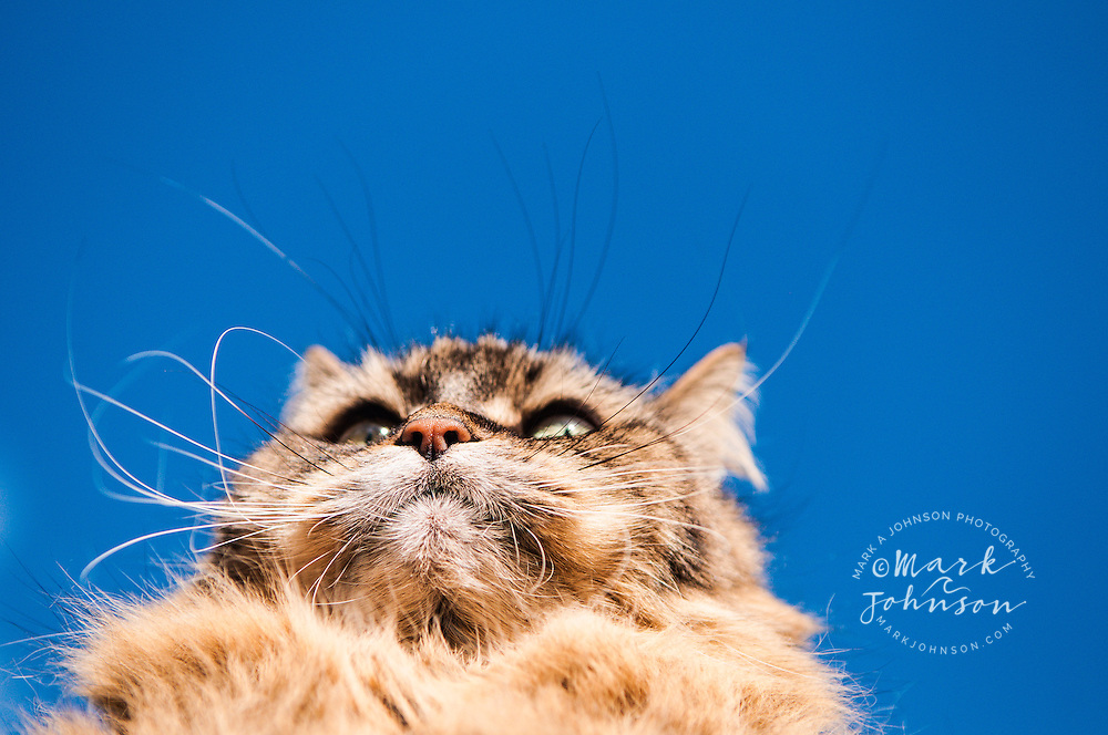 Fluffy cat *****Property Release available