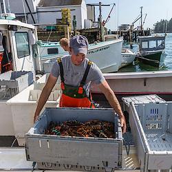 "Captain Matt Clemmons unloads lobster aboard ""Mean Kathleen"" at Potts Harbor Lobster in Harpswell, Maine."