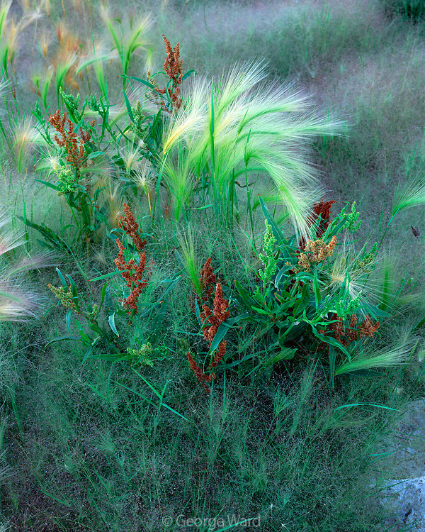 Mixed Grasses at Mono Lake, Mono Basin National Forest Scenic Area, California