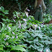 Small Shady Garden