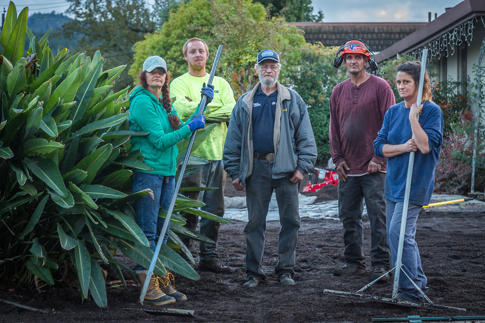 Kirstin Boehk (far right), owner of Anything Outside and her crew, Tammy McClain, Greg Domingo, Ed Null and Joshua Beall prepare to lay sod at a home on Lake Street in Calistoga.