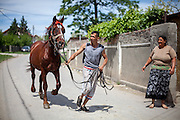 """You are still more likely to see horses as a mode of transport in Frumuşani than cars. """"We are one of the richest regions in the area and yet until recently no one knew how the budget was divided,"""" says Cristian Buceanu, a local Roma councilor elected in 2012."""