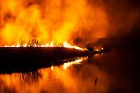 Biebrzanski Park Narodowy, 22.04.2020. Olbrzymi pozar w Biebrzanskim Parku Narodowym. Od niedzieli ( 19.04 ) plonie tam ok. 1400 hektarow lak, torfowisk, trzcinowisk i lasu. Gaszenie pozaru moze potrwac nawet pare dni. BPN jest najwiekszym polskim parkiem narodowym, maja tu swoja ostoje m.in losie oraz liczne gatunki ptakow. W nocy z 21/22.04 zagrozona przez ogien byla wies Dawidowizna fot Michal Kosc / AGENCJA WSCHOD