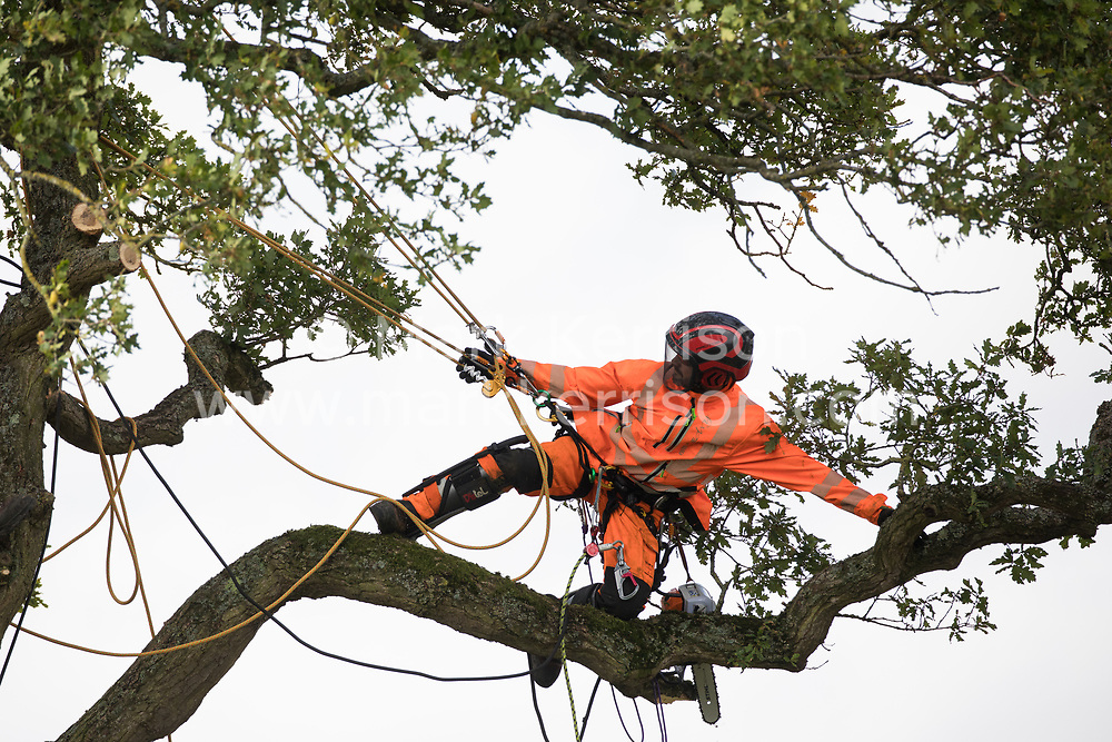 Steeple Claydon, 23rd September, 2020. A tree surgeon working with the National Eviction Team on behalf of HS2 Ltd fells a 200-year-old oak tree alongside the East West Rail route known locally as the '7 Sisters Oak' as part of works connected to the HS2 high-speed rail link. A small group of local people and anti-HS2 activists based at the nearby Poors Piece Conservation Project watched the felling of the tree, which was home to bats and other species, whilst monitored by a joint force of around fifty bailiffs, security guards and police officers from Thames Valley Police.