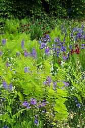 Irises and Cirsium rivulare in the Laurent-Perrier Garden. Design: Tom Stuart-Smith - Chelsea 2005