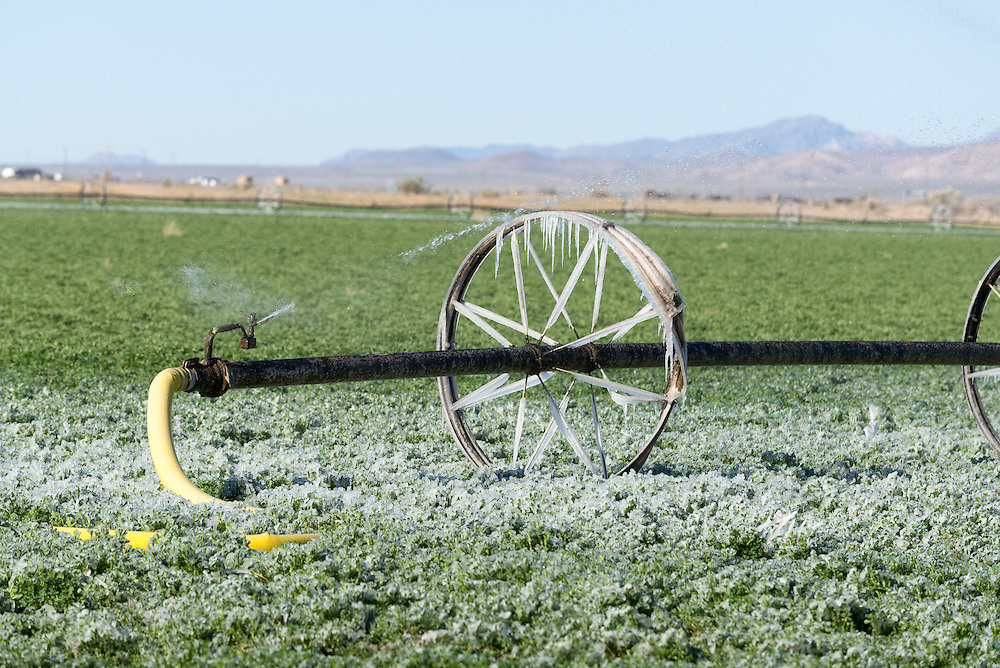Irrigation line and ice on a cold morning in Utah.