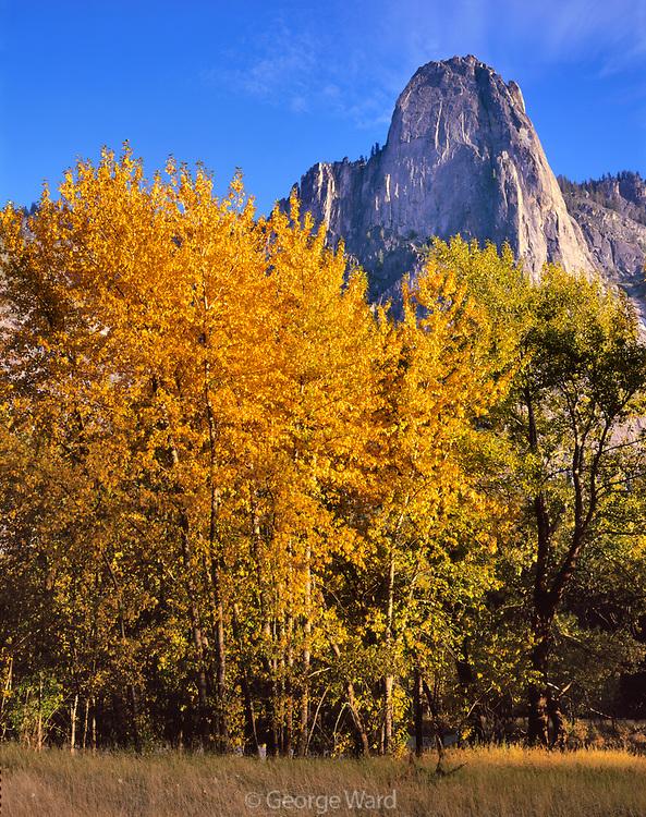 Cottonwood and Sentinel Rock, Yosemite National Park, California
