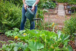 Using a stick, placed near pumpkin roots when planting, to see where you need to water once they get huge