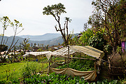 Polytunnels built by a former ICS group now in full production. Kaudi, Nepal. (Photo by Andy Aitchison/ICS)