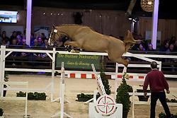 073 - Ermitage Kalone <br /> Hengsten keuring BWP - Koningshooikt 2017<br /> © Dirk Caremans<br /> 27/12/2016