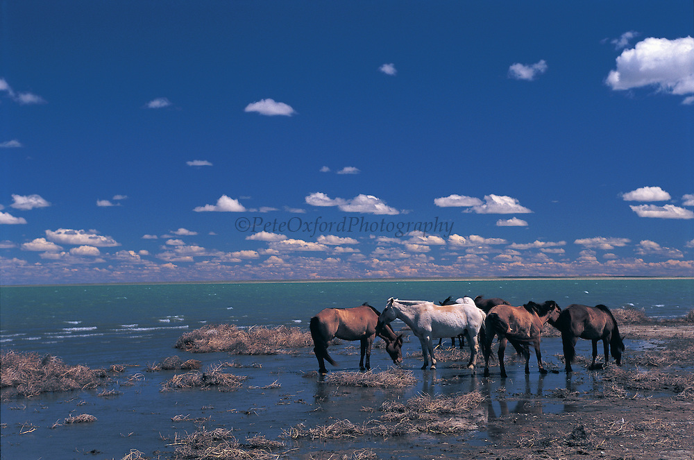 Mongolian horses<br /> Blue Lake or Khokh Nuur<br /> Lowest point in Mongolia at 560 meters<br /> Eastern Mongolia