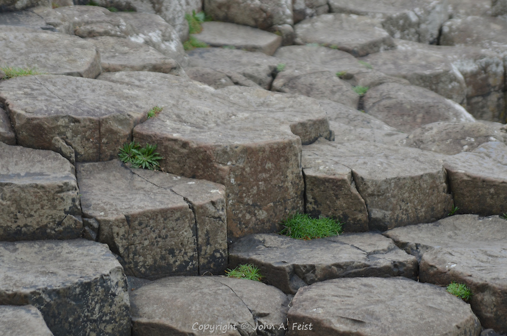 Small patches of green growing between the stones of the Giant's Causeway, County Antrim, Northern Ireland