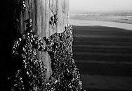 Ventura, CA Ventura Beach.(Chris Machian/ Prairie Pixel Group)