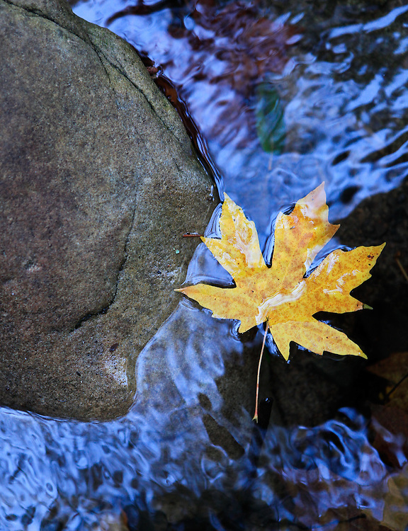 Leaf and water, California.