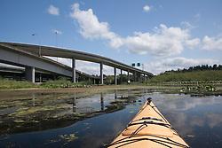 North America, United States, Washington, Bellevue,kayaking under highway bridge in Mercer Slough Nature Park.