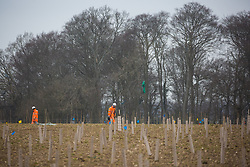 Great Missenden, UK. 18th March, 2021. Workers in high-visibility suits plant saplings on behalf of HS2 Ltd as a measure intended to mitigate for the destruction of ancient woodland at Jones Hill Wood for the HS2 high-speed rail link. There is currently considerable tree and hedgerow clearance work taking place for the project between Great Missenden and Wendover in the Chilterns AONB.