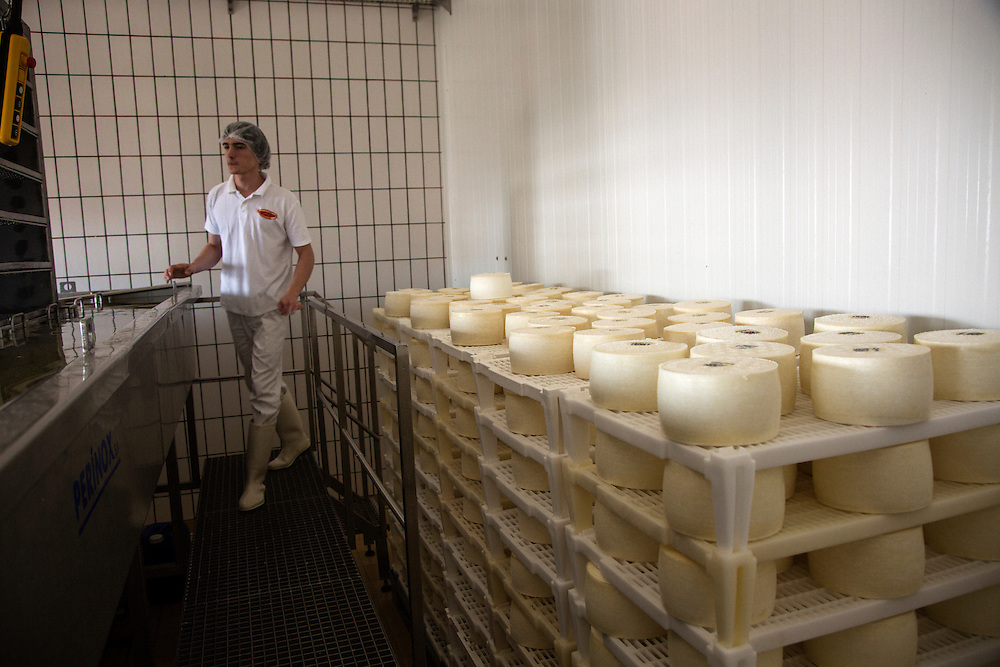 """Travel in Croatia<br /> <br /> Gligora cheese factory, which produces the famous Pag Island sheep's milk cheese """"Paski Sir"""", in the town of Kolan.<br /> <br /> June 2013<br /> Matt Lutton"""
