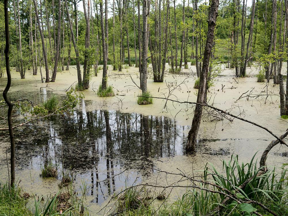 Zarastające jeziora przy trasie Liski - Grabnik  na Mazurach.