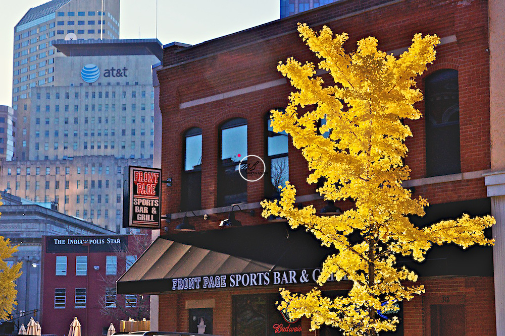 A Ginkgo Tree Grows in Indy