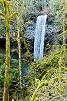 Shellburg Falls seen through the trees