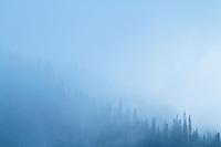 Hurricane Ridge, Olympic National Park, WA.