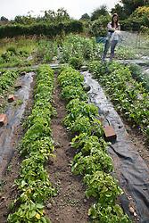 Woman watering potato plants