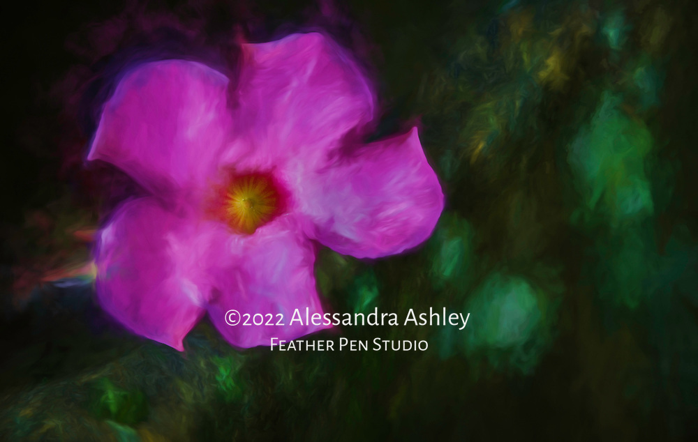 Deep pink Braziian jasmine, or mandevilla, peering over mossy garden wall. Painted effects blended with original photograph.