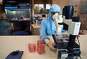 Nederland, Nijmegen, 14-12-2005..Een laborant van het umc radboud onderzoekt in een clean room op kweek gezette dendritische cellen. deze cellen worden gebruikt bij een nieuwe therapie, celtherapie, immuuntherapie, tegen enkele vormen van kanker. de resultaten zijn hoopgevend...Afweersysteem, genezing, medicijn, kankerbestrijding...Foto: Flip Franssen