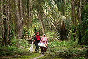 Two smallholder farmers collects push a wheelbarrow of palm fruits during harvesting on their family plantation in Ukui, Riau Province, Indonesia, on 15 June 2015. This area has become dominated by palm oil production, and some smallholder farmers have formed co-operatives to share costs, increase access to markets, and become certified by the Roundtable on Sustainable Palm Oil. She and her husband are part of Amanah, a local cooperative that has helped over 400 farmers become RSPO certified - reducing their use of pesticides and fertilizers, increasing yields, and improving farm management.