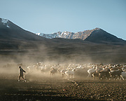 """A sheep and goat herd leaves camp in the early morning. Life in Baiqara, a Wakhi High pasture inhabited for about 6 months of the year, from May until October. Guiding and photographing Paul Salopek while trekking with 2 donkeys across the """"Roof of the World"""", through the Afghan Pamir and Hindukush mountains, into Pakistan and the Karakoram mountains of the Greater Western Himalaya."""