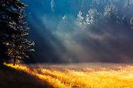 Sunny meadow with morning sunbeams
