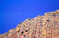 Turkey vultures flying over Devils Tower.  Devils Tower National Monument, Wyoming.