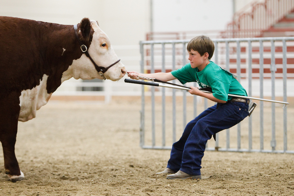 Same Hartman, 9, of Grand Island, tries his best to motive his hereford named Lilly to move during the 4-H Market Beef Show Saturday at the Hall County Fair. (Independent/Matt Dixon)