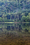 The forest reflecting in Deer lake at Sasquatch Provincial Park, Harrison Hot Springs, British Columbia, Canada