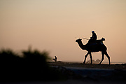 essaouira, morocco, camel on the beach at sunset Morocco travel photography