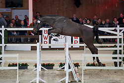 006, Pegase van't Ruytershof<br /> Hengstenkeuring BWP - Lier 2018<br /> © Hippo Foto - Dirk Caremans<br /> 20/01/2018