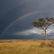 Rainbow over Masai Mara National Reserve after rains. Kenya. Africa