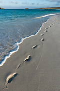 Footprints on Beach<br /> Gardner Bay <br /> Espanola<br /> Galapagos<br /> Ecuador, South America