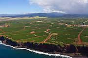 Coffee Farm, Kauai, Hawaii