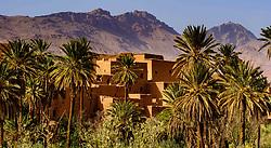 Tinghir oasis in the Todra Valley, Morocco<br /> <br /> (c) Andrew Wilson | Edinburgh Elite media