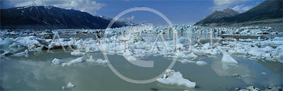 Canada. Yukon. Kluane National Park. Lowell glacier and calved icebergs in a silt filled lakewater.