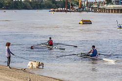 © Licensed to London News Pictures. 08/09/2020. London, UK. After the wind and rain, dog walkers and rowers on the Thames at Putney enjoy some warm weather as a mini heatwave for September hits the South East this week with temperatures predicted to reach up to 24c today. Photo credit: Alex Lentati/LNP