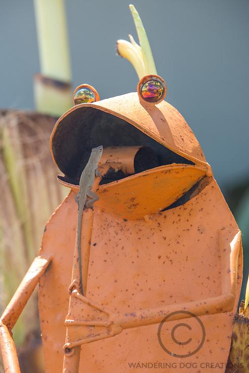 An anole lizard inspects a jovial frog, still playing his flute after the storm., Cudjoe Key