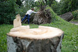 August 20, 2017 - Bydgoszcz, Poland - A woman is seen looking at an uprooted tree in a park on 20 August, 2017. Recent storms have caused severe damage to over 110 thousand acres in the country. (Credit Image: © Jaap Arriens/NurPhoto via ZUMA Press)