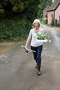 Woman walking down village lane holding runner bean plant seedlings, Shottisham, Suffolk, England